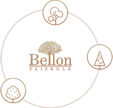 Bellon Faiskola Debrecen
